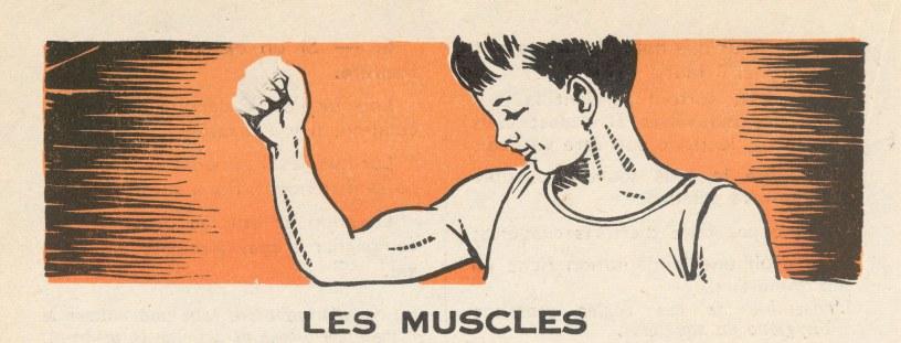 Muscles Illustration